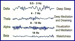 The four levels of brain wave states are shown in this illustration